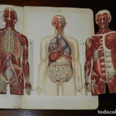 Libros antiguos: ESTUDIO ELEMENTAL DEL CURPO HUMANO EN PIEZAS ANATOMICAS - ED. SUCESORES DE HERNANDO - CIRCA 1920 - M. Lote 235562730