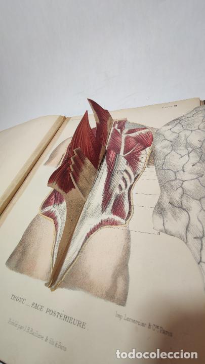 Libros antiguos: El cuerpo humano. estructuras y funciones. Eduardo Cuyer. 2 tomos. Desplegables. Madrid. 1880. - Foto 14 - 236137325