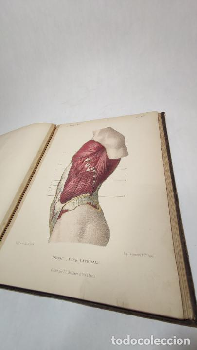 Libros antiguos: El cuerpo humano. estructuras y funciones. Eduardo Cuyer. 2 tomos. Desplegables. Madrid. 1880. - Foto 15 - 236137325