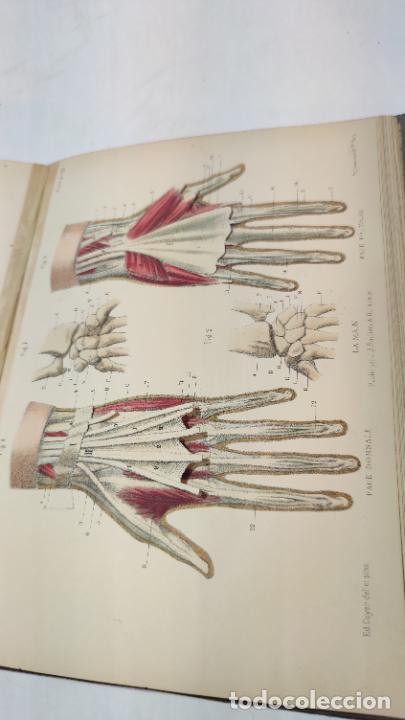 Libros antiguos: El cuerpo humano. estructuras y funciones. Eduardo Cuyer. 2 tomos. Desplegables. Madrid. 1880. - Foto 17 - 236137325