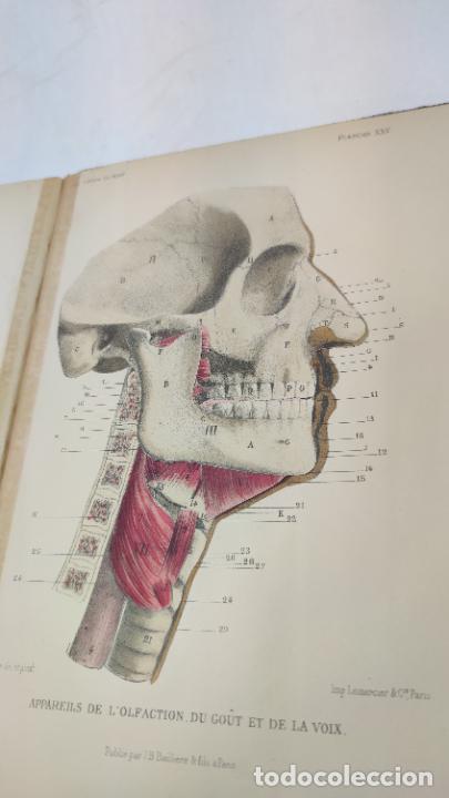 Libros antiguos: El cuerpo humano. estructuras y funciones. Eduardo Cuyer. 2 tomos. Desplegables. Madrid. 1880. - Foto 21 - 236137325