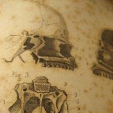 Libros antiguos: ANATOMIA DESCRIPTIVA ATLAS CUERPO HUMANO 1850 J. MASSE MUSEO CIENTIFICO . PRECIOSOS GRABADOS DEFECTU. Lote 252556190