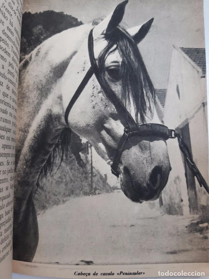 Libros antiguos: O EXTERIOR DO CAVALO Jose Miranda Do Vale Medicina Veterinaria Caballo 1966 - Foto 17 - 253899555