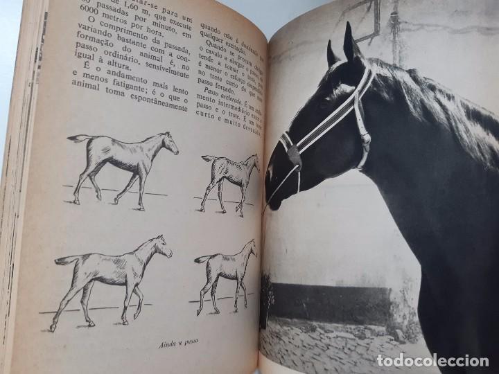 Libros antiguos: O EXTERIOR DO CAVALO Jose Miranda Do Vale Medicina Veterinaria Caballo 1966 - Foto 19 - 253899555