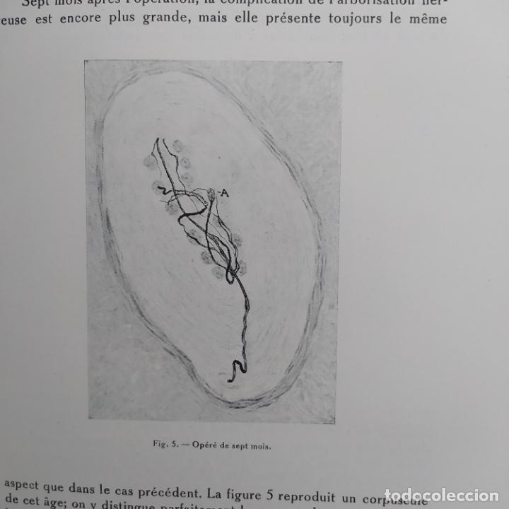 Libros antiguos: Ramon y Cajal. Travaux du laboratoire de recherches biologiques de lUniversité de Madrid. 1933 - Foto 16 - 255558370
