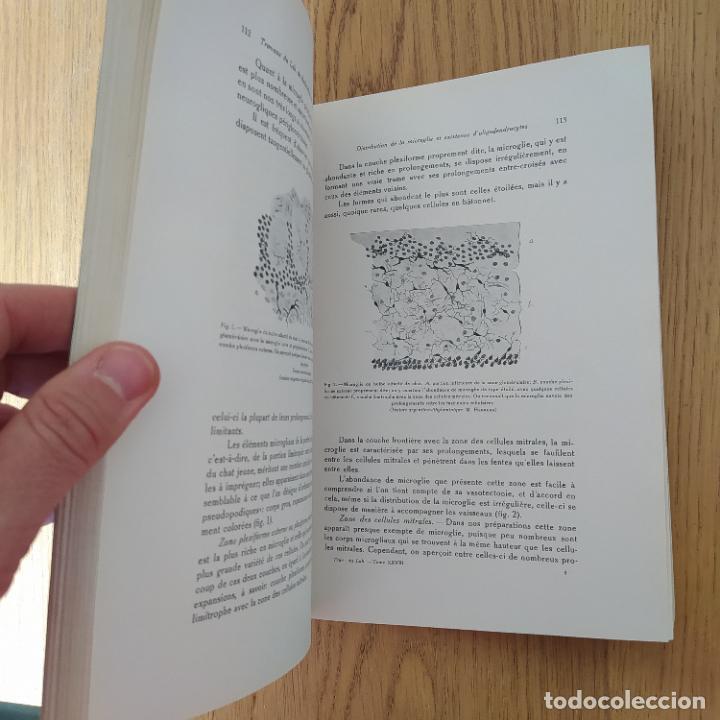 Libros antiguos: Ramon y Cajal. Travaux du laboratoire de recherches biologiques de lUniversité de Madrid. 1933 - Foto 17 - 255558370