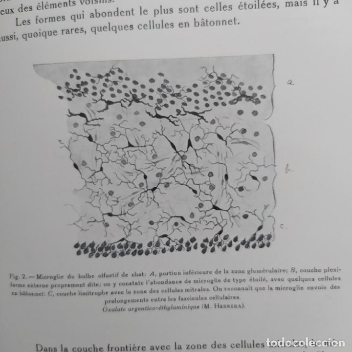 Libros antiguos: Ramon y Cajal. Travaux du laboratoire de recherches biologiques de lUniversité de Madrid. 1933 - Foto 18 - 255558370