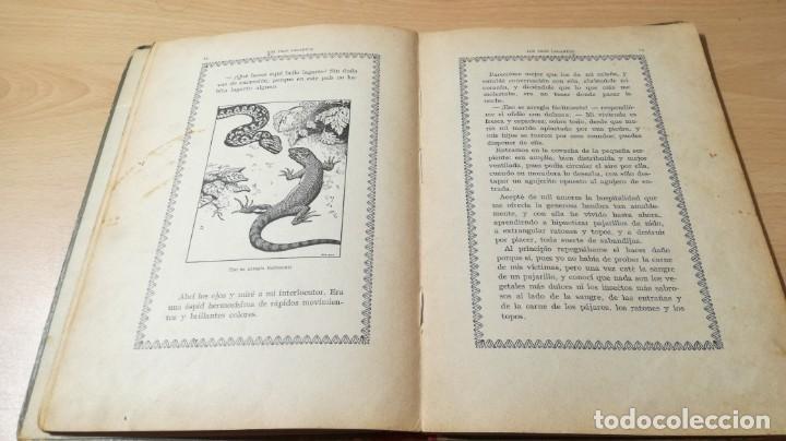 Libros antiguos: LOS TRES LAGARTOS - MANUEL MARINEL - LO DIBUJOS RICARDO OPISSO 1918 SUC BLAS CAMI BARCELONA / M102 - Foto 14 - 189460605