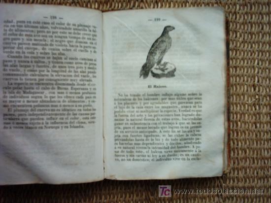 Libros antiguos: EL BUFFON DE LOS NIÑOS. COMPENDIO DE HISTORIA NATURAL. 1873. ILUSTRADO CON 208 GRABADOS ENTRE TEXTO. - Foto 4 - 26639797