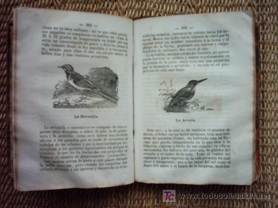 Libros antiguos: EL BUFFON DE LOS NIÑOS. COMPENDIO DE HISTORIA NATURAL. 1873. ILUSTRADO CON 208 GRABADOS ENTRE TEXTO. - Foto 5 - 26639797