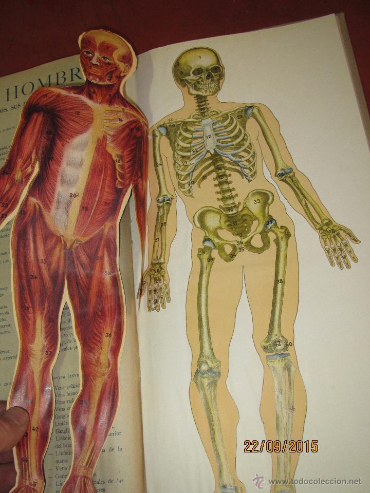 antiguo album de anatomia elemental *el hombre* - Comprar Libros ...
