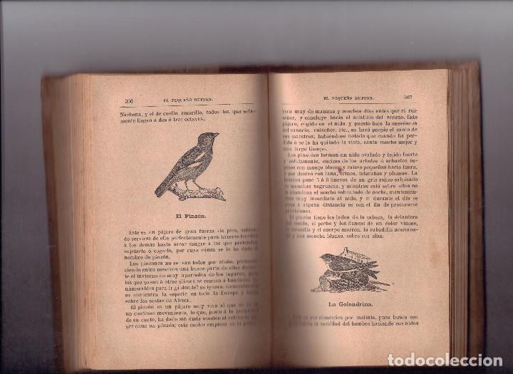 Libros antiguos: EL PEQUEÑO BUFFON COMPENDIO DE HISTORIA NATURAL, 1893 - Foto 2 - 154048466