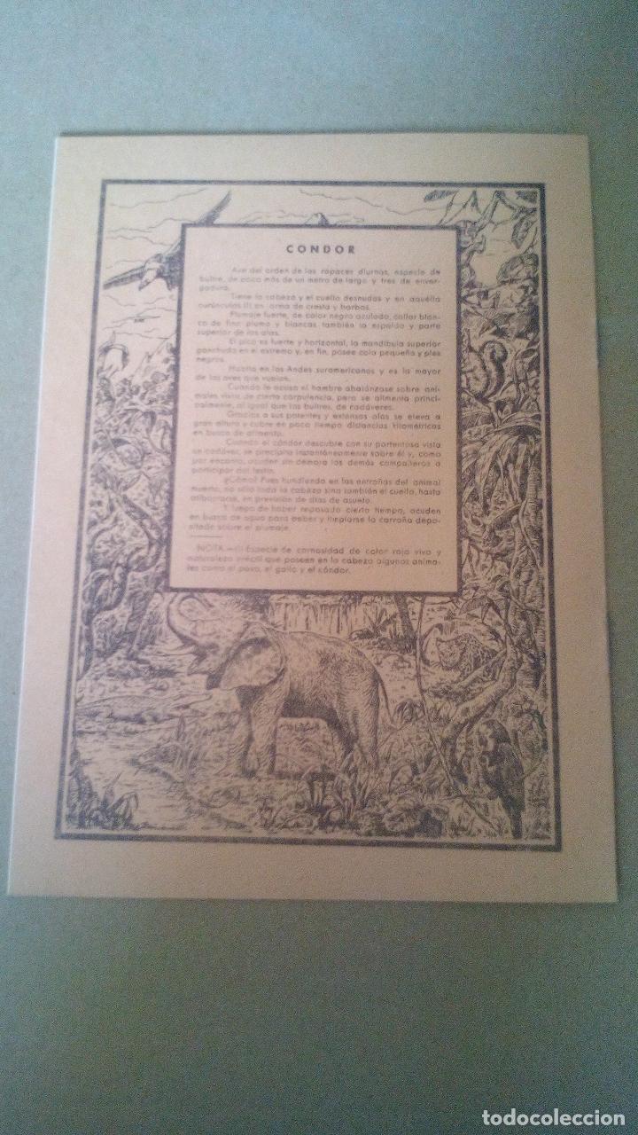 Libros antiguos: CUADERNO DE ESCUELA, PORTADA DE ANIMALES, CONDOR - A ESTRENAR, PROCEDEN DE ANTIGUA PAPELERIA - Foto 2 - 169075268
