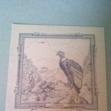 Libros antiguos: CUADERNO DE ESCUELA, PORTADA DE ANIMALES, CONDOR - A ESTRENAR, PROCEDEN DE ANTIGUA PAPELERIA. Lote 169075316