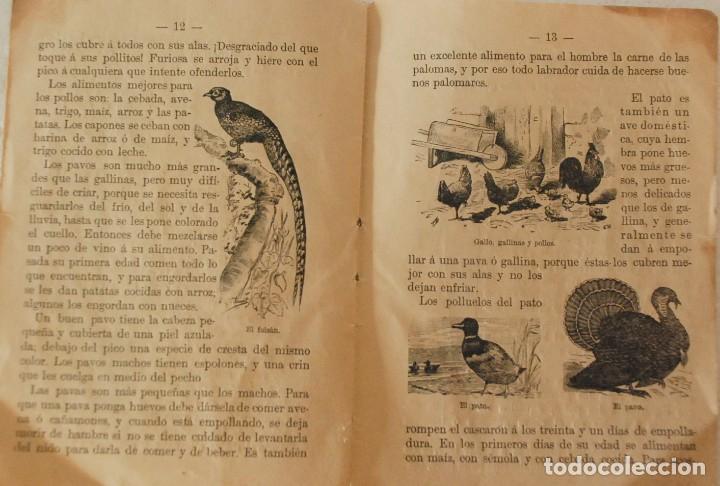 Libros antiguos: RARO HISTORIA NATURAL-LECTURAS AMENAS INSTRUCTIVAS NIÑOS -LAS AVES- CALLEJA Y GUILLERMO HERRERO 1891 - Foto 3 - 194735008