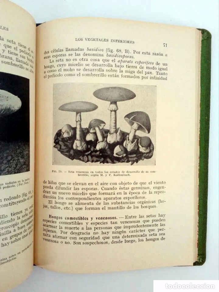 Libros antiguos: INICIACIÓN EN LAS CIENCIAS FÍSICONATURALES. TERCER CURSO (Salustio Alvarado) SGP, 1936 - Foto 6 - 195123403
