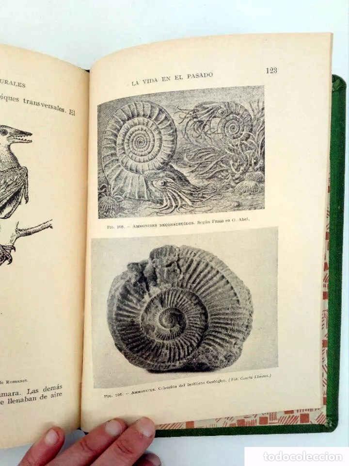 Libros antiguos: INICIACIÓN EN LAS CIENCIAS FÍSICONATURALES. TERCER CURSO (Salustio Alvarado) SGP, 1936 - Foto 7 - 195123403