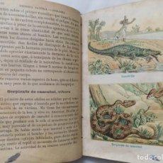 Libros antiguos: LIBRERIA GHOTICA. FAUSTINO PALUZIE. HISTORIA NATURAL EXPLICADA A LOS NIÑOS. 1900. CROMOLITOGRAFIAS. Lote 252379850