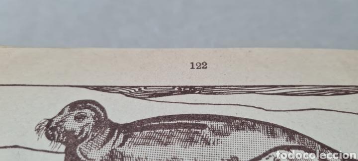 Libros antiguos: Preciosa libro de lectura en catalán. Petites llavors. Anicet Villar. Miquel A. Salvatella. - Foto 10 - 288417263