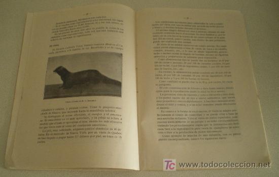 Libros antiguos: Producción de pieles ricas. Cría de animales salvajes en cautividad. - Foto 3 - 10944704