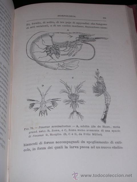 Libros antiguos: COCINA - T H HUXLEY , IL GAMBERO INTRODUZIONE ALLO STUDIO DELLA ZOOLOGIA , MILANO 1883 - Foto 4 - 13791755