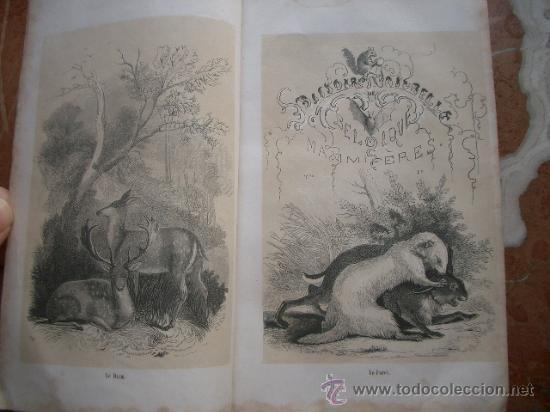 Libros antiguos: Historia natural de Bélgica HISTOIRE NATURELLE DE LA BELGIQUE - Foto 2 - 24540266