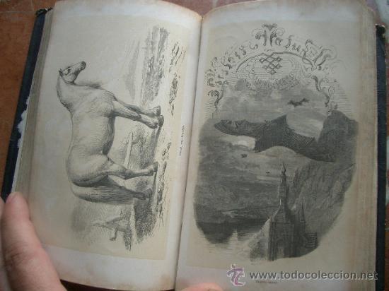 Libros antiguos: Historia natural de Bélgica HISTOIRE NATURELLE DE LA BELGIQUE - Foto 4 - 24540266