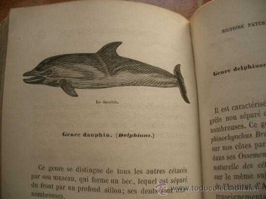 Libros antiguos: Historia natural de Bélgica HISTOIRE NATURELLE DE LA BELGIQUE - Foto 5 - 24540266