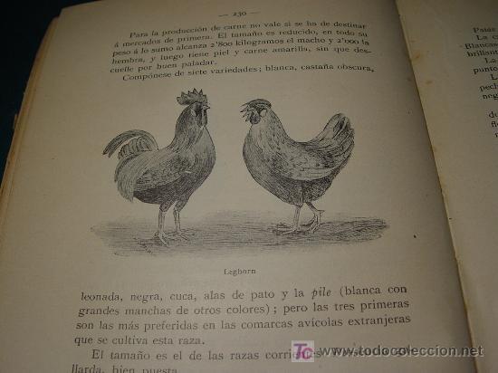 Libros antiguos: AVICULTURA INDUSTRIAL - GALLINAS PATOS GANSOS PAVOS Y PINTADAS - BARCELONA 1911 - - Foto 8 - 26524242