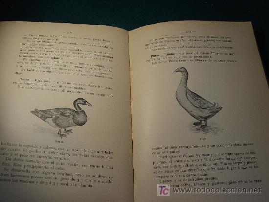 Libros antiguos: AVICULTURA INDUSTRIAL - GALLINAS PATOS GANSOS PAVOS Y PINTADAS - BARCELONA 1911 - - Foto 5 - 26524242