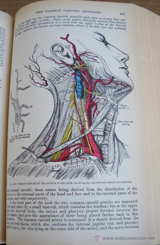 antiguo libro grays anatomy - por henry gray - - Comprar en ...