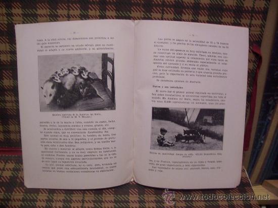 Libros antiguos: PRODUCCION DE PIELES RICAS - 1934 - CRÍA ANIMALES SALVAJES EN CAUTIVIDAD - Foto 2 - 19456987
