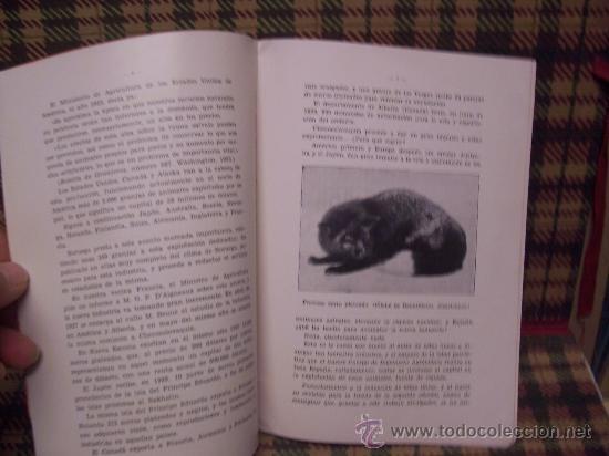 Libros antiguos: PRODUCCION DE PIELES RICAS - 1934 - CRÍA ANIMALES SALVAJES EN CAUTIVIDAD - Foto 3 - 19456987