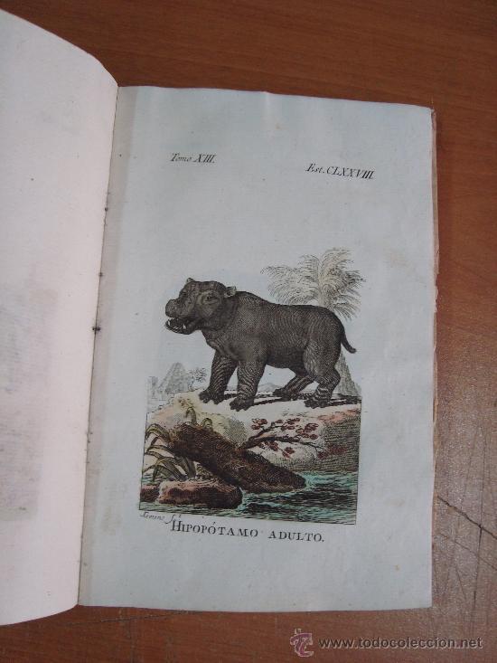 Libros antiguos: HISTORIA NATURAL, GENERAL Y PARTICULAR. CONDE DE BUFFON. TOMO XIII. IBARRA 1798. - Foto 6 - 23797458