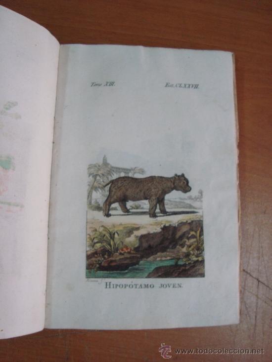 Libros antiguos: HISTORIA NATURAL, GENERAL Y PARTICULAR. CONDE DE BUFFON. TOMO XIII. IBARRA 1798. - Foto 7 - 23797458