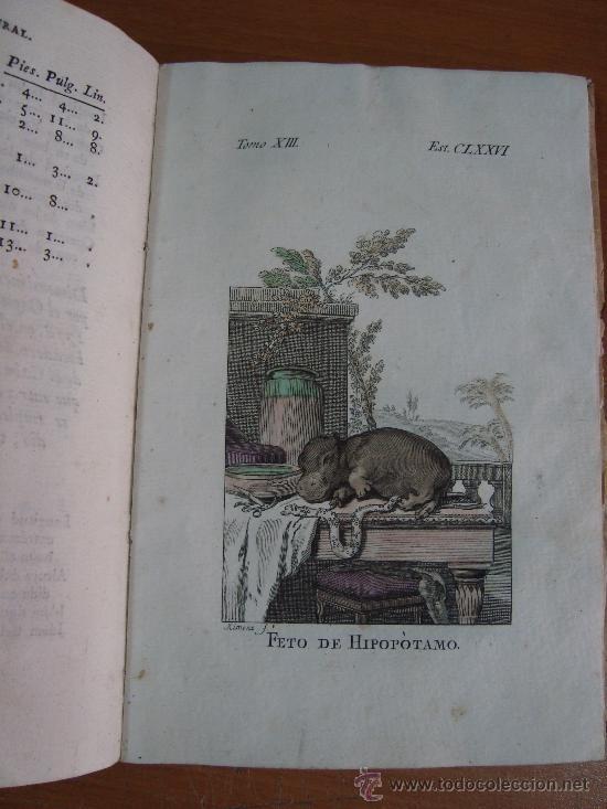 Libros antiguos: HISTORIA NATURAL, GENERAL Y PARTICULAR. CONDE DE BUFFON. TOMO XIII. IBARRA 1798. - Foto 8 - 23797458