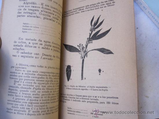 Libros antiguos: ARBORICULTURA FRUTALES - ENFERMEDADES DE LOS FRUTALES -EN PORTUGUES 1911- ILUSTRADO CORREOS 3.9€ - Foto 4 - 20061732