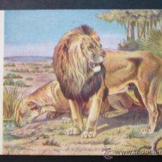 Libros antiguos: EL REINO ANIMAL PARA NIÑOS. ANIMALES SALVAJES. Nº 1.. Lote 26062294