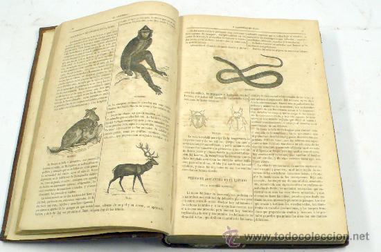 Libros antiguos: el universo o las obras de diós. Francisco Fernandez villabrielle, tomo 1. año 1854. 18x27 cm - Foto 3 - 27720657