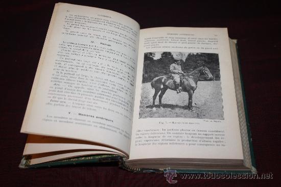 Libros antiguos: 1573- FANTÁSTICO LIBRO 'RACES CHEVALINES', PAUL DIFFLOTH, AÑO 1916 - Foto 3 - 27729750