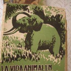 Libros antiguos: LA VIDA ANIMAL EN LA GUINEA ESPAÑOLA - AURELIO BASILIO - . Lote 32017799