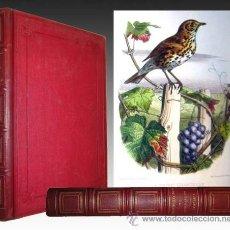 Libros antiguos: 1868 - LETTRES A JULIE - TRATADO DE ORNITOLOGIA - 16 LAMINAS ILUMINADAS - EN FRANCÉS. Lote 32540021