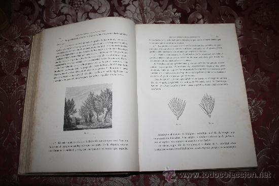Libros antiguos: 1355- 'HISTORIA GENERAL DE LA AGRICULTURA' ESTUDIO TEÓRICO Y PRÁCTICO 3 TOMOS 18?? EDITOR JAIME SEIX - Foto 7 - 33155661
