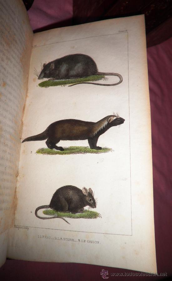 Libros antiguos: OBRAS DE BUFFON - AÑO 1842 - BELLA EDICION ILUSTRADA CON GRABADOS EN COLOR. - Foto 9 - 36367937