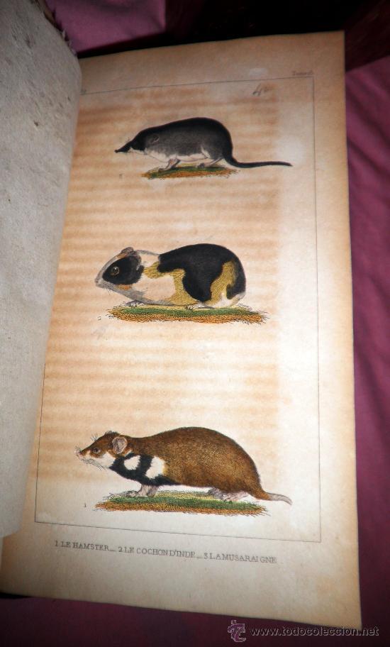 Libros antiguos: OBRAS DE BUFFON - AÑO 1842 - BELLA EDICION ILUSTRADA CON GRABADOS EN COLOR. - Foto 10 - 36367937