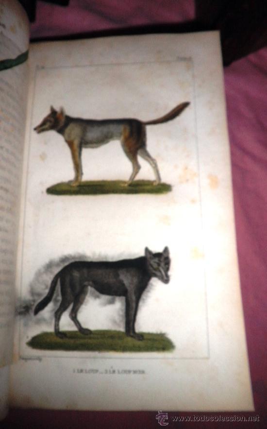 Libros antiguos: OBRAS DE BUFFON - AÑO 1842 - BELLA EDICION ILUSTRADA CON GRABADOS EN COLOR. - Foto 12 - 36367937