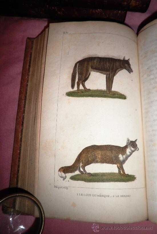 Libros antiguos: OBRAS DE BUFFON - AÑO 1842 - BELLA EDICION ILUSTRADA CON GRABADOS EN COLOR. - Foto 14 - 36367937