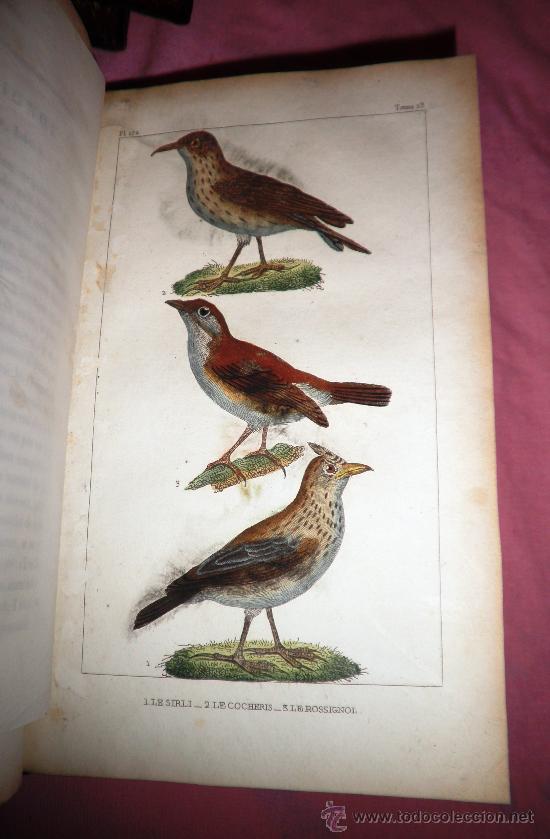 Libros antiguos: OBRAS DE BUFFON - AÑO 1842 - BELLA EDICION ILUSTRADA CON GRABADOS EN COLOR. - Foto 17 - 36367937