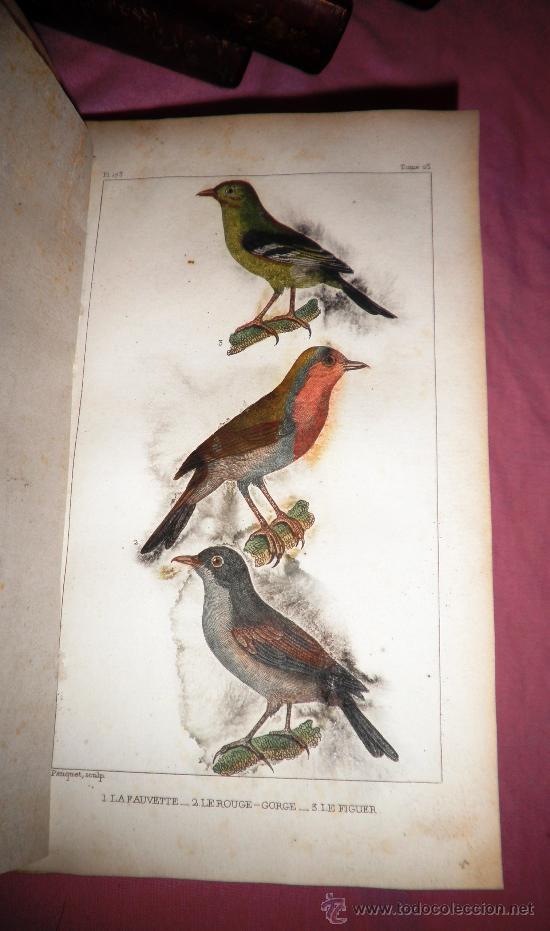 Libros antiguos: OBRAS DE BUFFON - AÑO 1842 - BELLA EDICION ILUSTRADA CON GRABADOS EN COLOR. - Foto 18 - 36367937