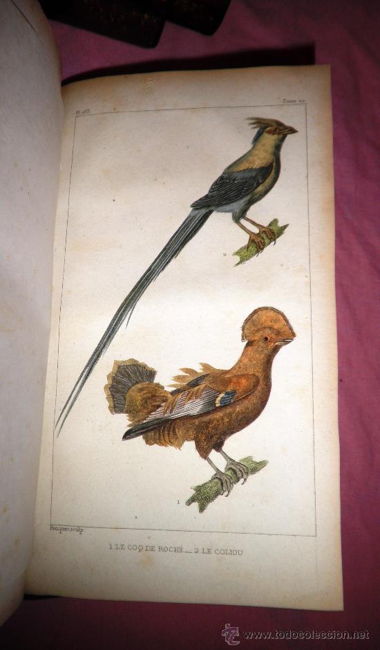 Libros antiguos: OBRAS DE BUFFON - AÑO 1842 - BELLA EDICION ILUSTRADA CON GRABADOS EN COLOR. - Foto 19 - 36367937